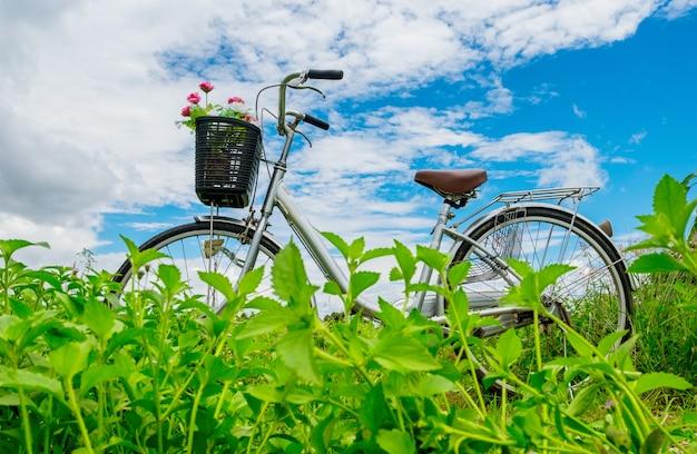 Vélo vintage avec fleur rose sur panier dans le jardin