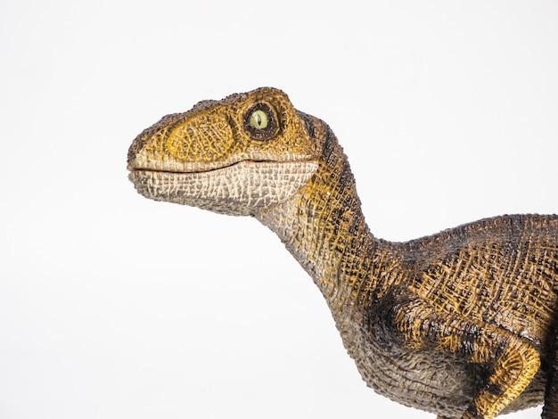 Velociraptor dinosaure