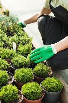 Vendeur sur le marché aux fleurs en plein air. les mains de femme donnent le pot