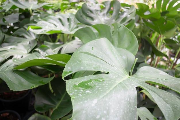 Vente De Pots De Plantes Tropicales Sur Le Marché Vert, Stock Photo Photo Premium