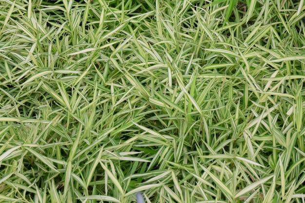 Vente de pots de plantes tropicales sur le marché vert, stock photo