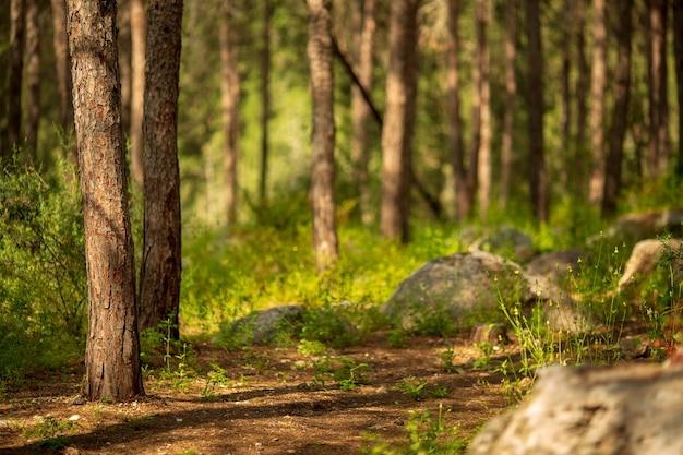 Verdure de la forêt d'été. sentier aventureux avec une végétation luxuriante au début du printemps