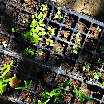 Verdure plantes en pot jardinage nature