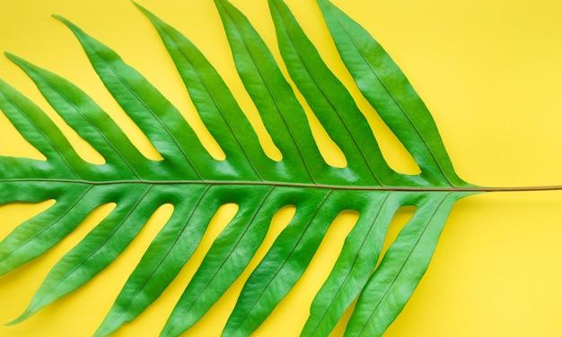 Véritables feuilles de fougère sur fond de couleur pastel. concepts de conception de motifs tropicaux botaniques.