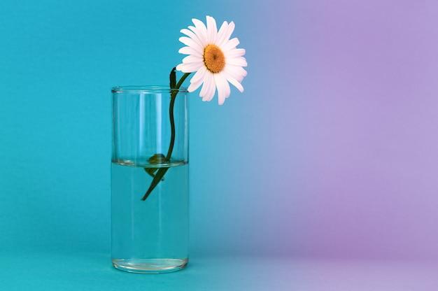 Un verre avec une belle fleur de camomille brillante sur un fond bleu.