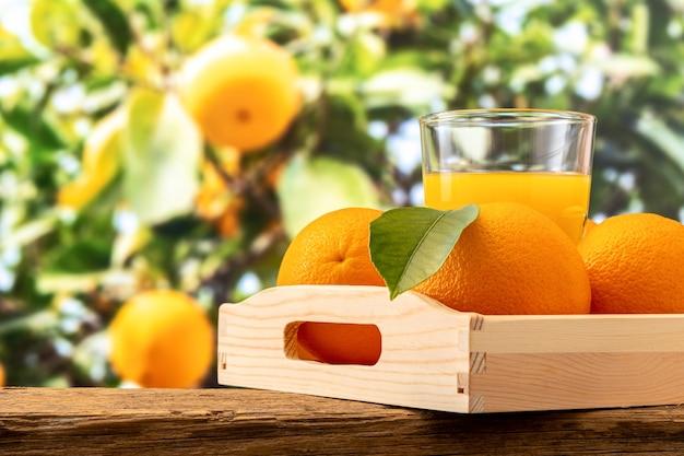 Verre de jus d'orange et fruits orange sur la nature.