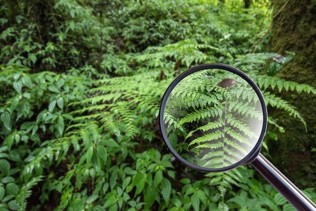 Verre maginfier. fougère dans le parc national de doi inthanon, chiang mai, thaïlande