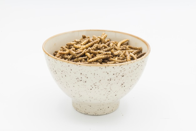 Vers de farine crustacés tenebrio molitor isolé
