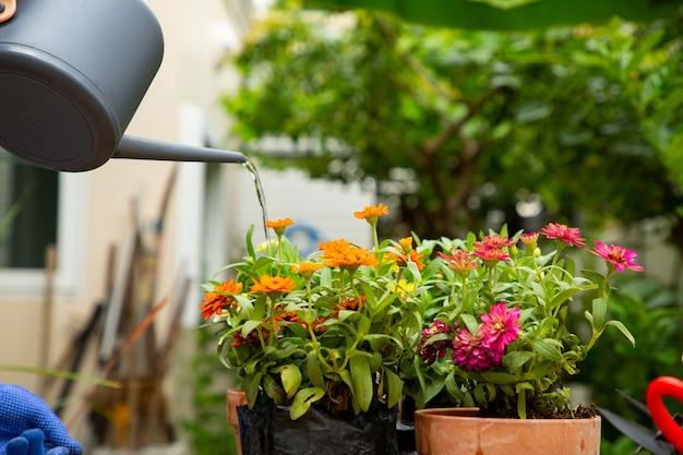 Verser De L'eau Pour Planter En Extérieur. Jardinage Et Décoration Pour Rester à La Maison. Photo Premium