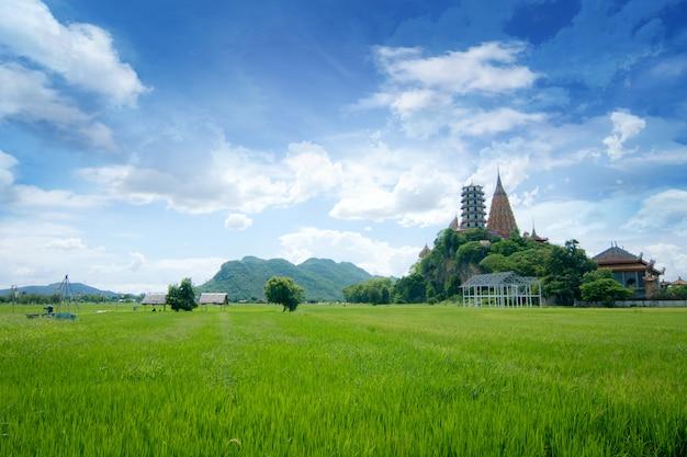 Vert classé de riz avec un ciel bleu