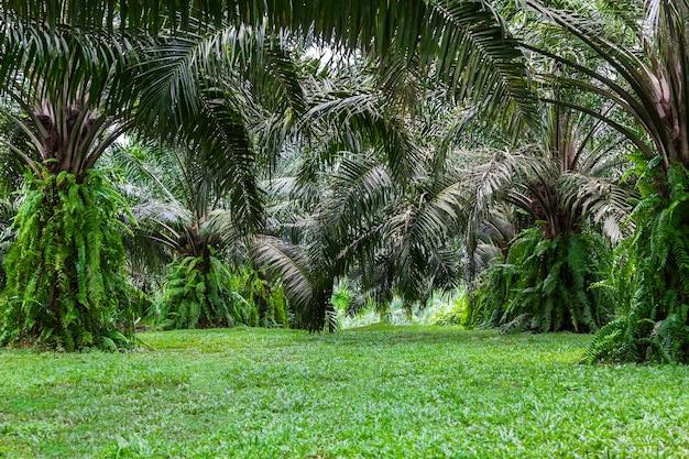 Vert du palmier de la forêt tropicale