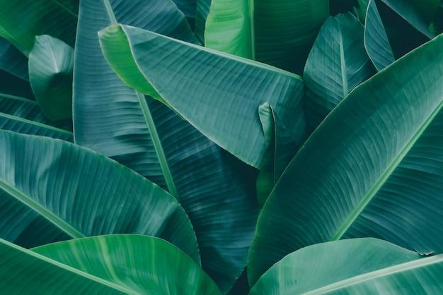 Vert foncé feuille nature arrière-plan jungle tropicale feuillage tons vert foncé