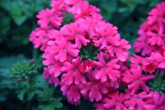 Vert foncé nature fleur pétales de fond météo