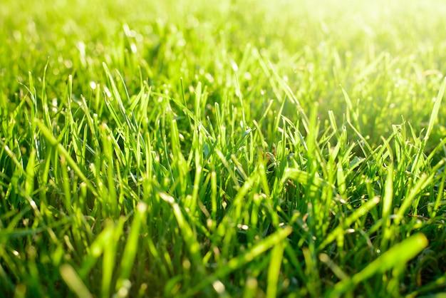 Vert frais tondu l'herbe contre la lumière du soleil au printemps. notion de fraîcheur, de début, de pureté.