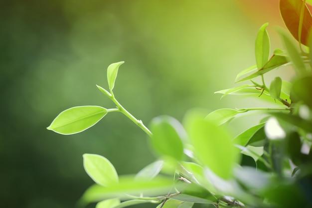 Vert laisse sur fond vert naturel.
