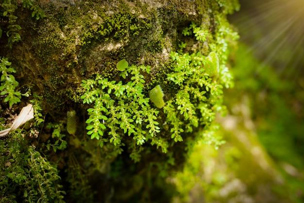Vert mos sur l'arbre