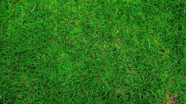 Vert naturel, belles feuilles, tapis en gazon synthétique, vue de dessus