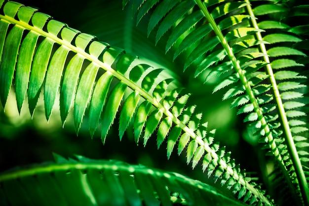 Vert naturel