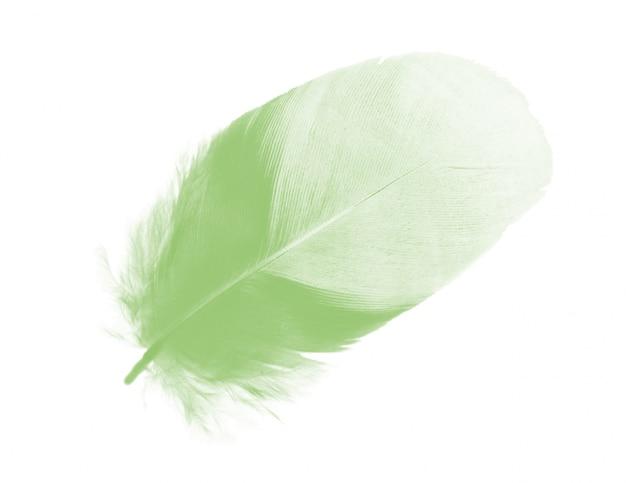 Vert plume sur fond blanc