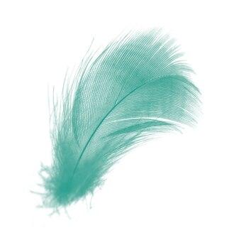 Vert plume isolé sur blanc
