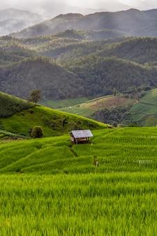 Vert, rizière en terrasse à pa pong pieng, mae chaem, province de chiang mai, thaïlande