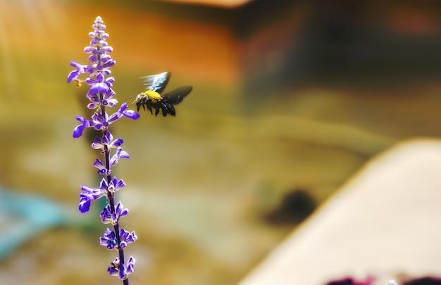 Un vespidae volant à la lumière du matin dans un jardin de fleurs avec un arrière-plan flou.