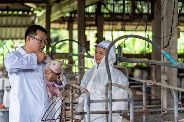Vétérinaire asiatique avec assistant tenant pour vérifier et injecter le bébé cochon dans les fermes porcines
