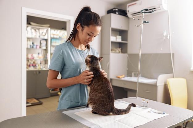 Une vétérinaire asiatique câline un chat tigré au rendez-vous dans une clinique moderne