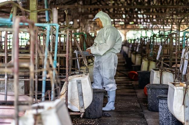 Vétérinaire asiatique travaillant et vérifiant le bébé cochon dans les élevages porcins, l'industrie de l'élevage d'animaux et de porcins