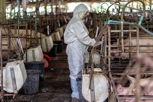 Vétérinaire asiatique travaillant et vérifiant le bébé cochon dans les élevages porcins, l'industrie de l'élevage d'animaux