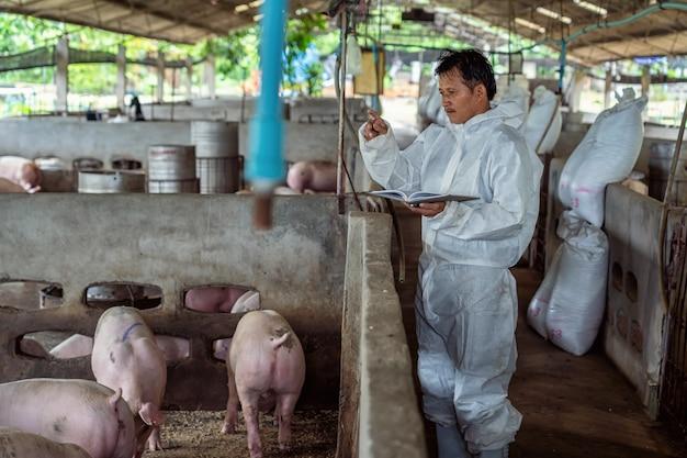 Vétérinaire asiatique travaillant et vérifiant le porc dans des élevages porcins