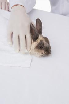 Un vétérinaire attrape un lapin mignon