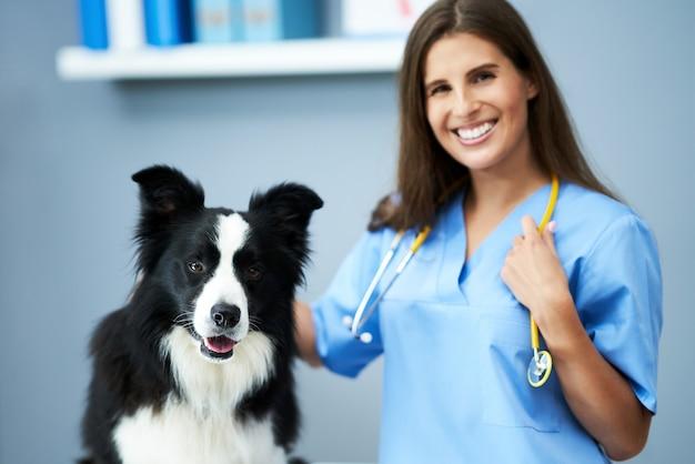 Vétérinaire examinant un chien en clinique