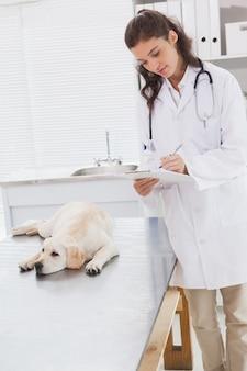 Vétérinaire examinant un chien et écrit sur le presse-papiers