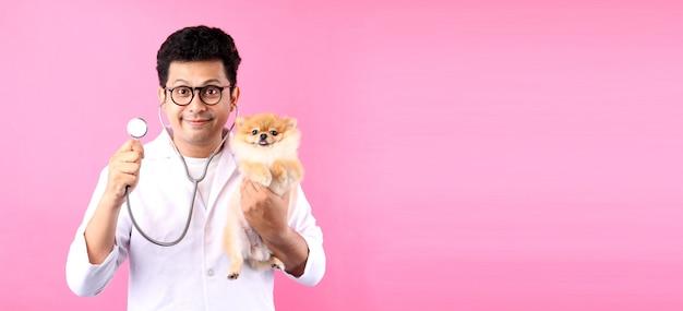 Vétérinaire homme confiant examinant chien poméranien sur fond rose en studio