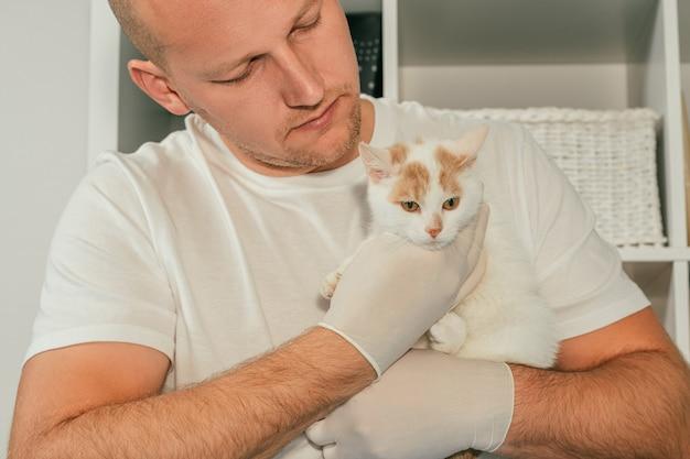 Un vétérinaire masculin en gants et en t-shirt tient un chaton blanc et roux dans ses bras, pour un examen médical