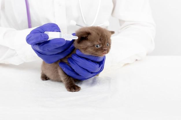 Le vétérinaire présente des gouttes pour les yeux à un beau petit chaton atteint de conjonctivite