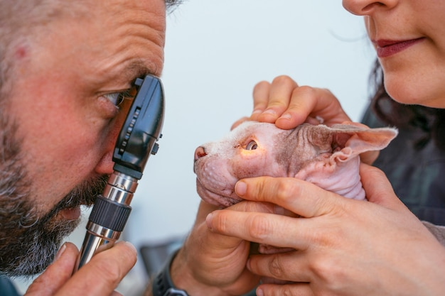 Vétérinaire professionnel masculin à l'aide d'une loupe pour vérifier toute capacité de vision dysfonctionnelle.