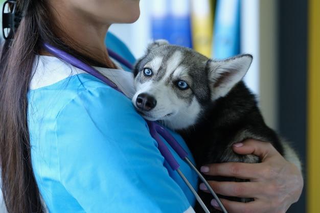 Le vétérinaire à la réception tient dans les bras un petit husky effrayé