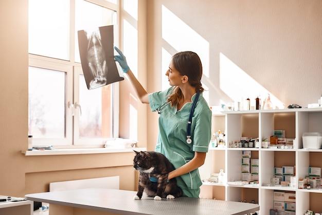 Une vétérinaire en uniforme de travail regarde une radiographie de chat et tient un patient