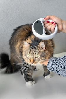 Le vétérinaire vérifie la puce électronique sur un chat avec un scanner à puce électronique