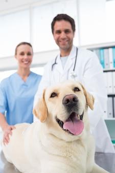 Vétérinaires avec chien en clinique