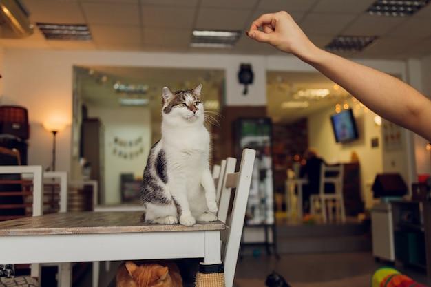 La vie domestique avec animal de compagnie. jeune homme donne sa collation de viande de chat.