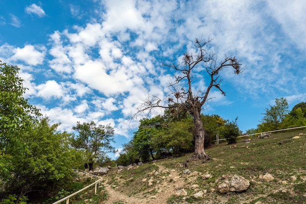 Vieil arbre mort dans le village