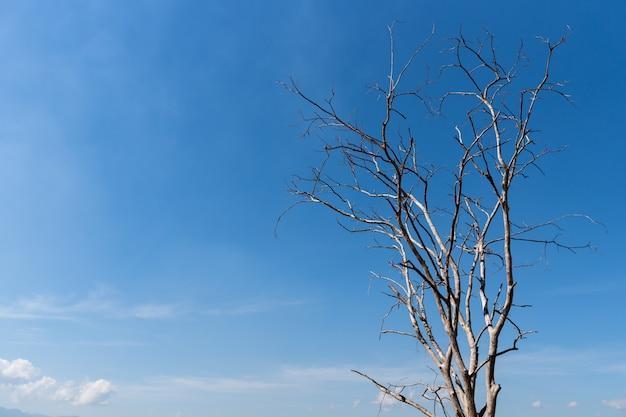 Vieil arbre mort avec fond de ciel bleu avec espace de copie