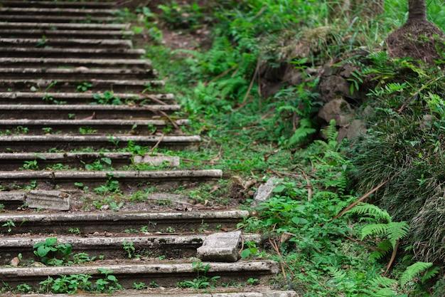 Le vieil escalier abandonné dans le parc passera au vert vivant, très humide en climat tropical