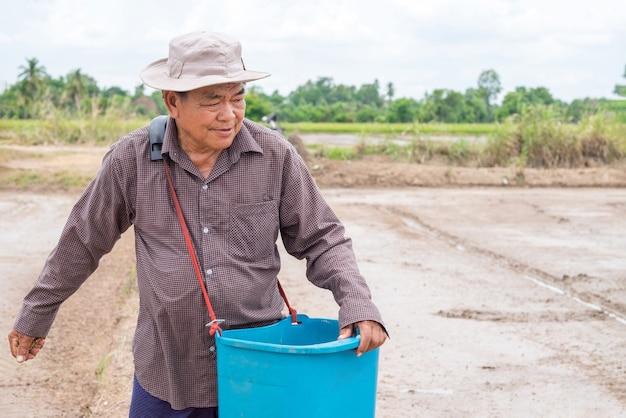 Un vieil homme agriculteur asiatique lance des plants de riz dans un champ de riz.