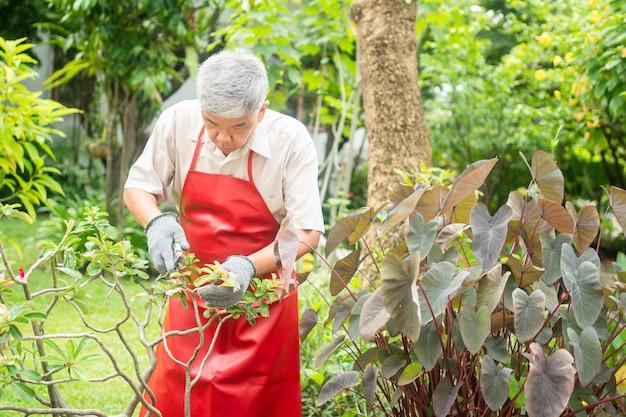 Un vieil homme asiatique heureux et souriant taille des brindilles et des fleurs pour un passe-temps après sa retraite dans une maison. concept d'un mode de vie heureux et d'une bonne santé pour les personnes âgées.