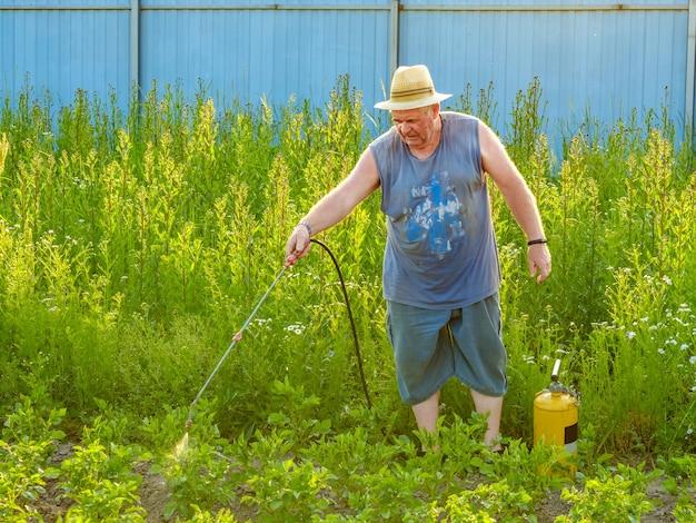 Un vieil homme coiffé d'un chapeau pulvérise un insecticide sur le dessus des pommes de terre. la lutte contre le doryphore de la pomme de terre et autres insectes nuisibles. soirée ensoleillée d'été.