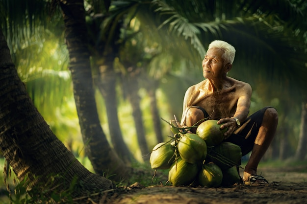 Vieil homme collecte de noix de coco dans la ferme de noix de coco en thaïlande.